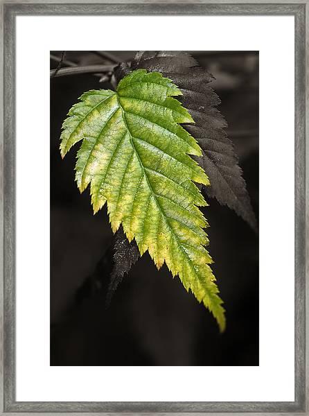Tree Leaf Study  Framed Print