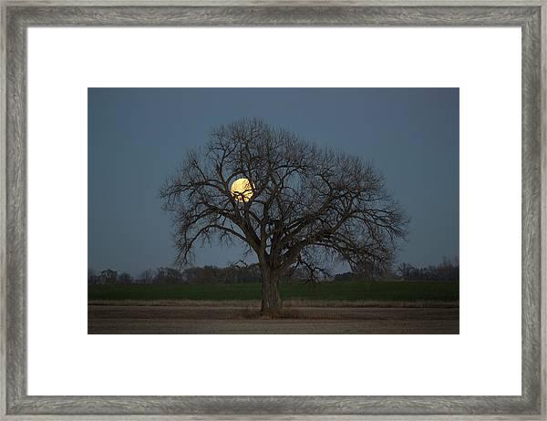 Tree Of Supermoon Framed Print