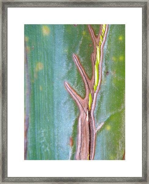 Tree On A Leaf Framed Print by Alyona Firth