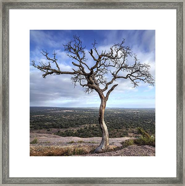 Tree On Enchanted Rock - Square Framed Print