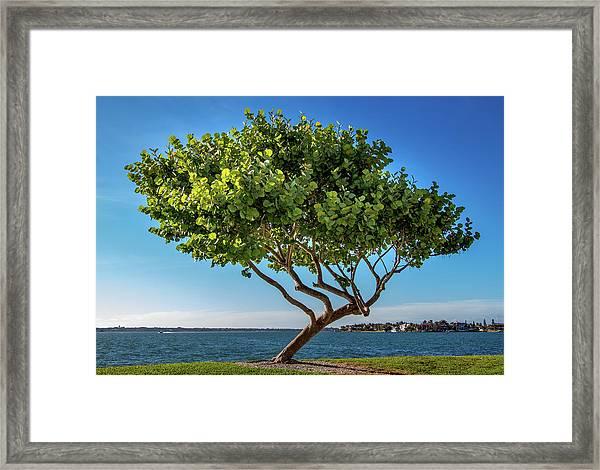 Tree On The Bay Framed Print