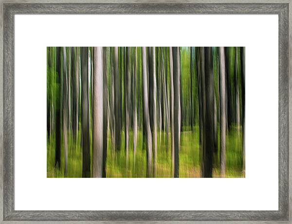 Tree Painting Framed Print