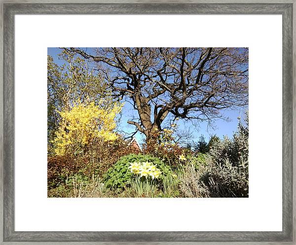 Tree Photo 991 Framed Print