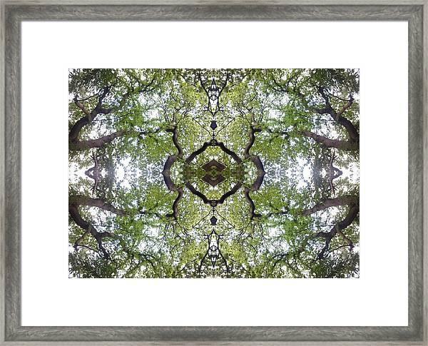 Tree Photo Fractal Framed Print
