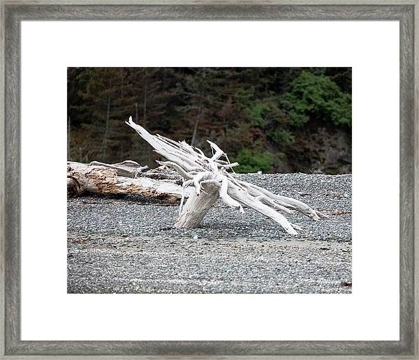 Tree Roots Framed Print