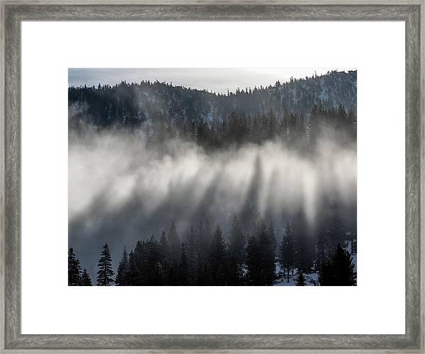 Tree Shadows Framed Print