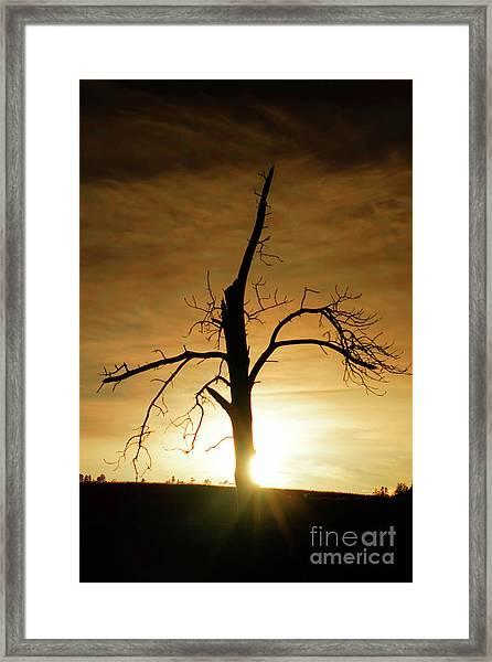 Tree Silhouette At Sundown Framed Print