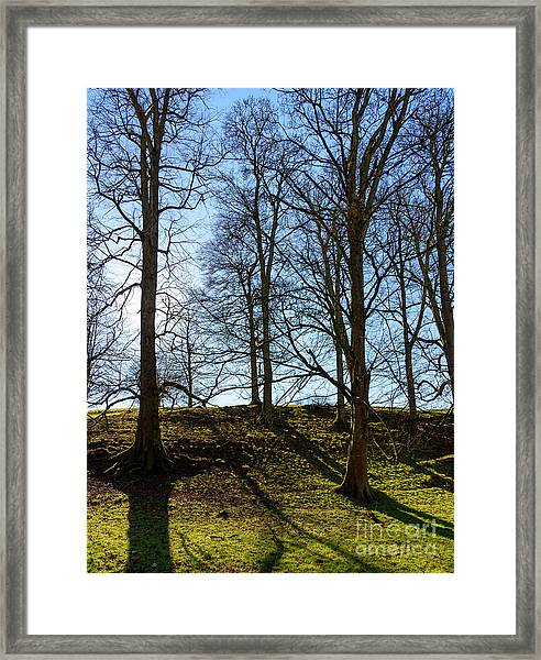 Tree Silhouettes Framed Print