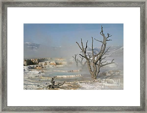Tree Skeletons In The Mist Framed Print