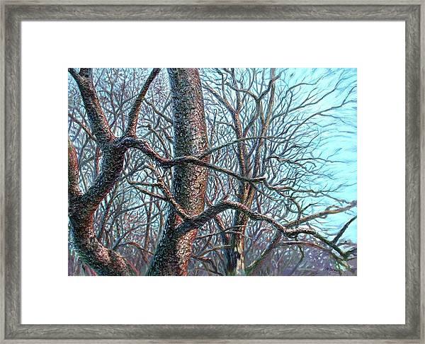 Tree Study Framed Print