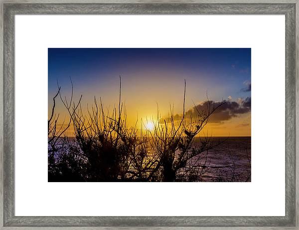 Tree Sunset Framed Print