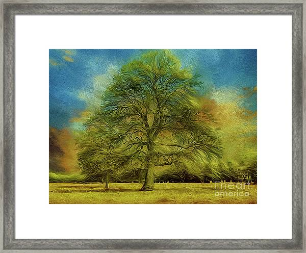 Tree Three Framed Print