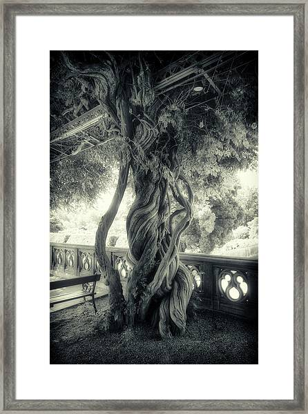 Tree Trunk Bw Series Y6693 Framed Print