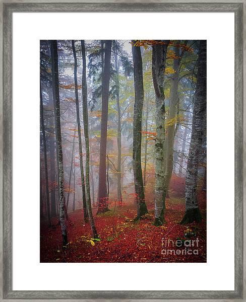 Tree Trunks In Fog Framed Print