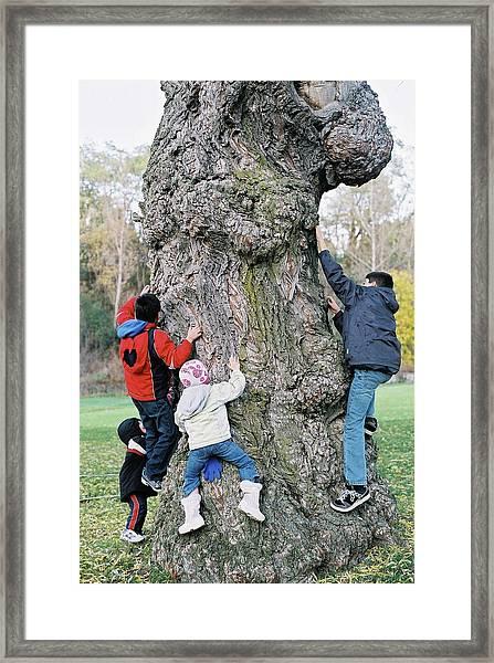 Tree Urchins Framed Print
