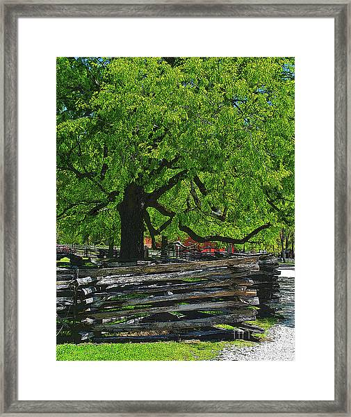 Tree With Colonial Fence Framed Print