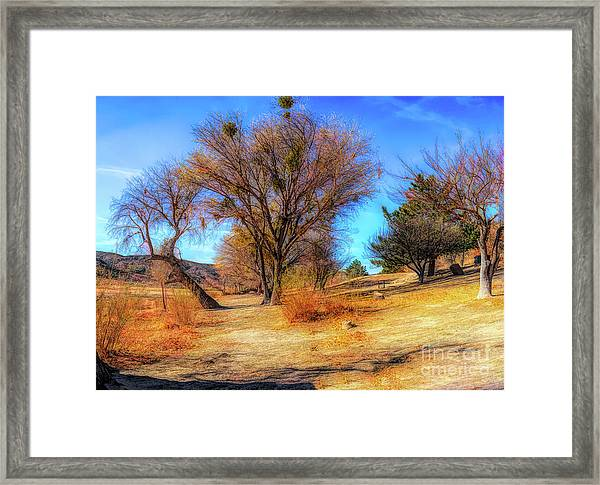 Trees Along Elizabeth Lake Framed Print
