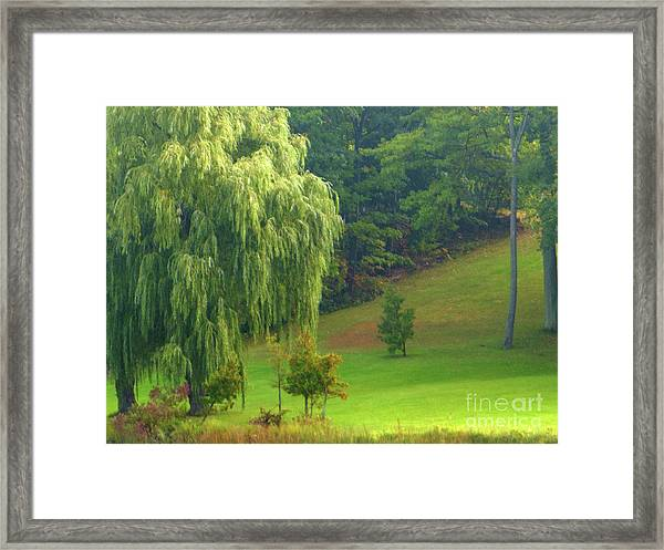 Trees Along Hill Framed Print
