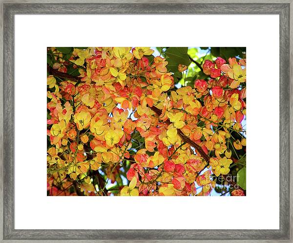 Trees And Flowers In Hawaii Framed Print