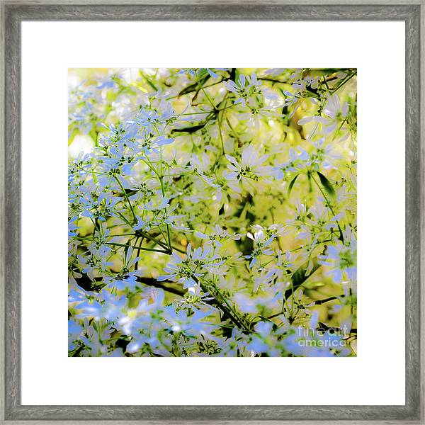 Trees And Leaves Framed Print