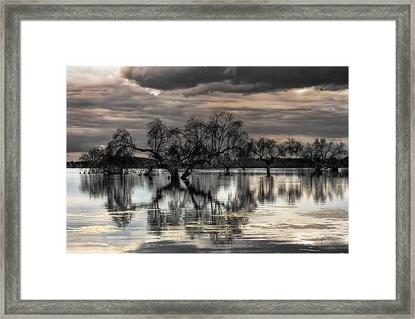 Trees Dream Framed Print