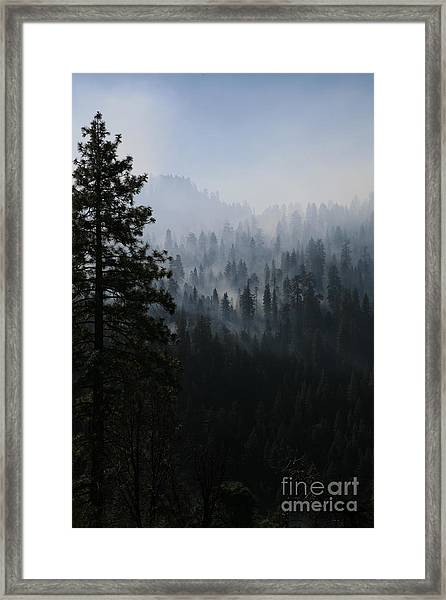 Trees In Yosemite Framed Print