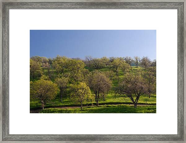 Trees On Hillside Framed Print