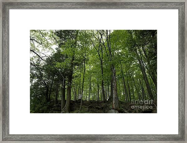 Trees On The Edge Framed Print