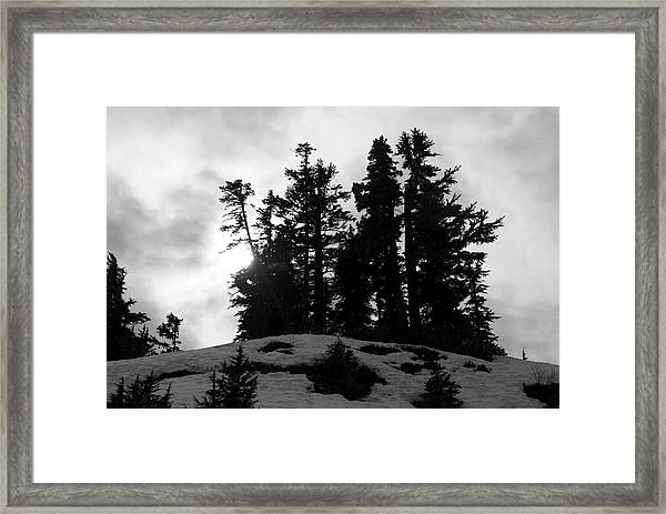 Trees Silhouettes Framed Print
