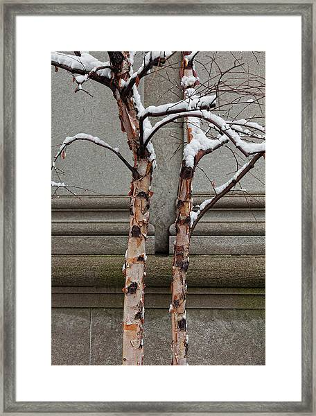 Trees Wall And Snow Framed Print