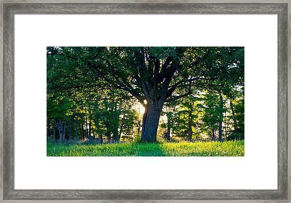 Treescape Framed Print