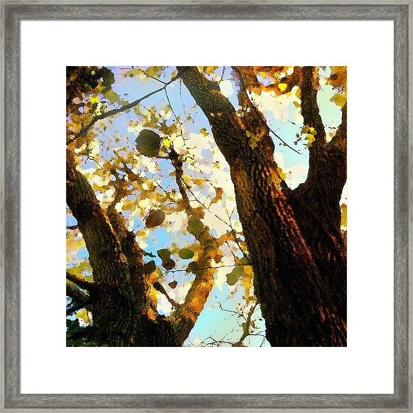Treetop Abstract-look Up A Tree Framed Print