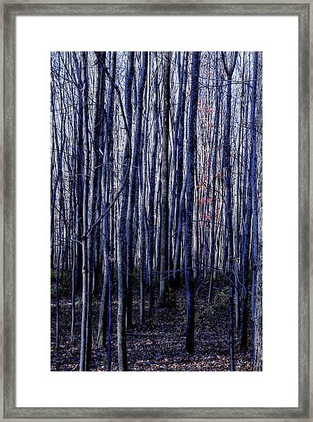 Treez Blue Framed Print
