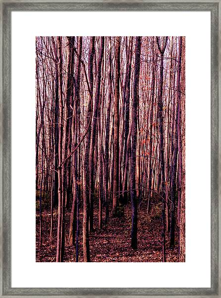 Treez Red Framed Print