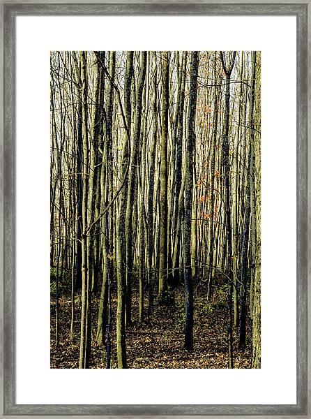Treez Yellow Framed Print