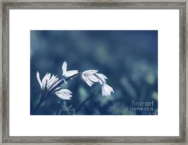 Tremble Framed Print