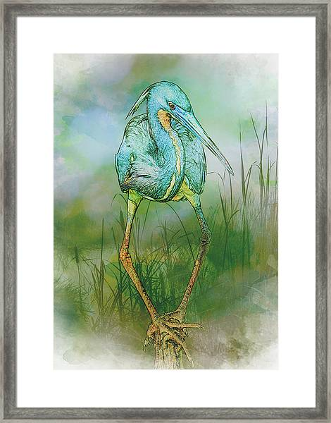 Framed Print featuring the photograph Tri-colored Heron Balancing Act - Colorized by Patti Deters