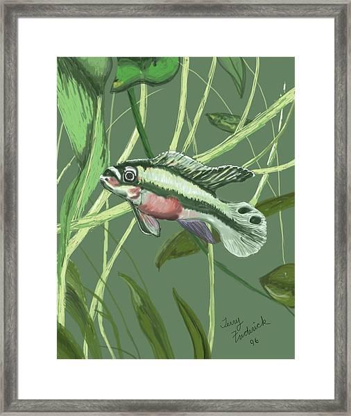 Tri Color Krib Framed Print