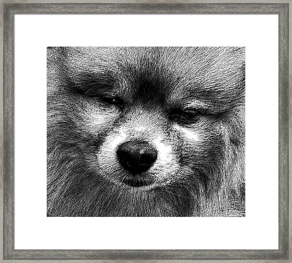 Tribute To Jojo Rip Buddy Framed Print
