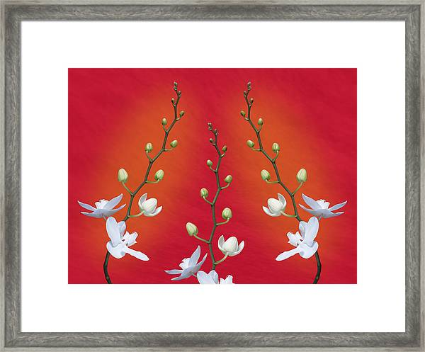 Trifecta Of Orchids Framed Print