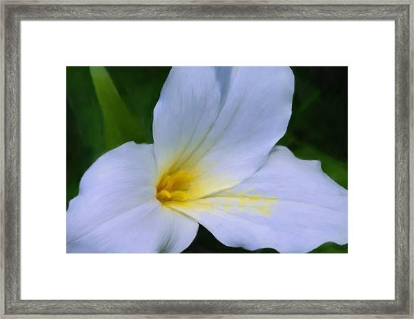 Trillium 0157 Framed Print by Peter Skiba