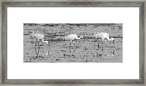 Trio Of Cranes Framed Print