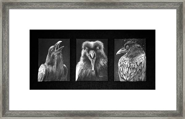 Trio Of Ravens Framed Print
