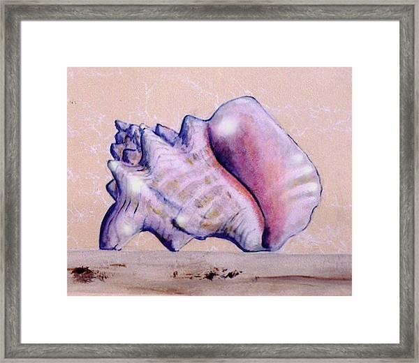 Trompe L'oeil Conch Shell Framed Print