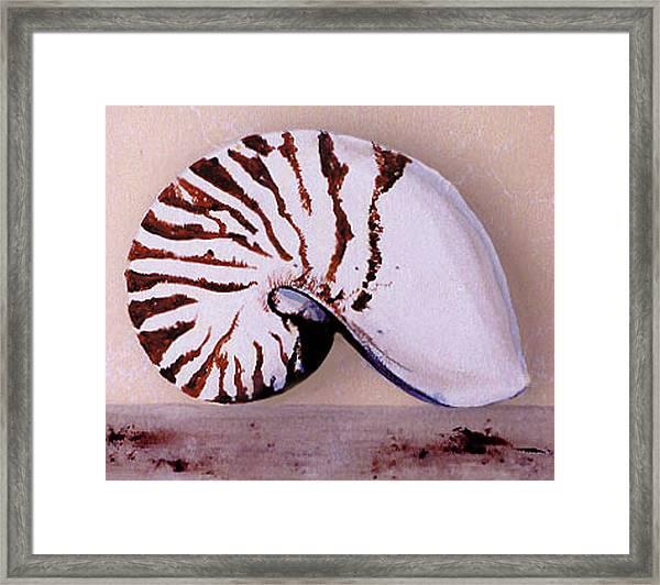 Trompe L'oeil  Framed Print