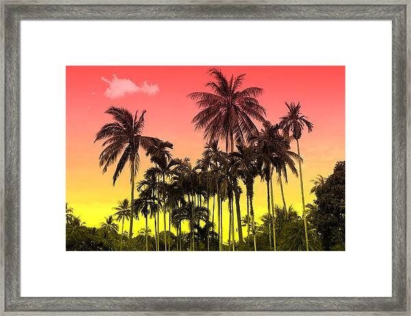 Tropical 9 Framed Print