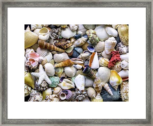 Tropical Beach Seashell Treasures 1500a Framed Print