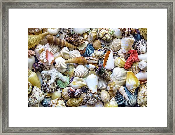 Tropical Beach Seashell Treasures 1529b Framed Print