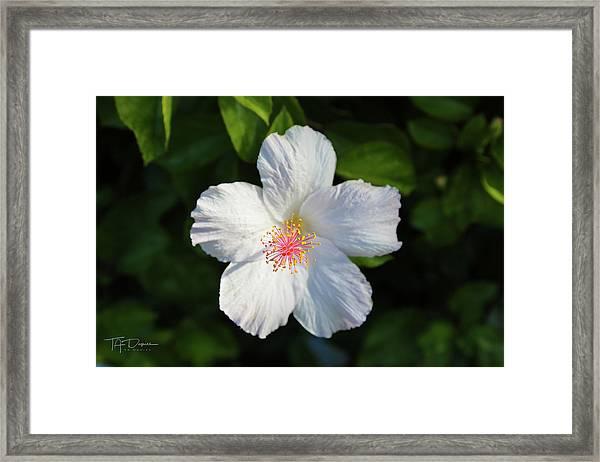 Tropical Flower 2 Framed Print