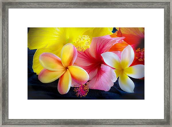 Tropical Melange Framed Print